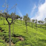 Top 5 Things to See And Do in Ooty